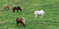 Hestene ved Stuggusjoen 1